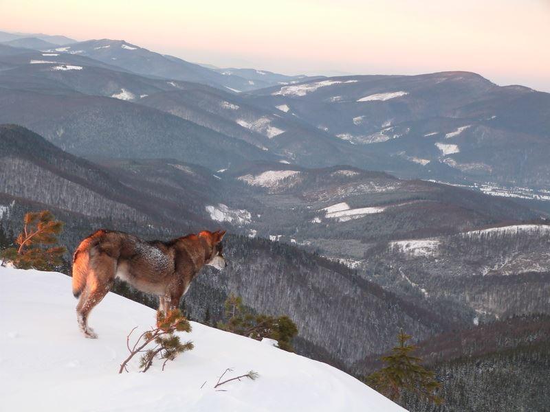 Зимова казка: прикарпатський рятувальник показав світлини із походу засніженими Карпатами (фото)