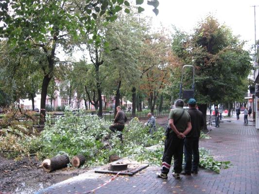 Повалені дерева, опала штукатурка, та пошкоджений балкон: у середу ввечері негода в Івано-Франківську розійшлася не на жарт