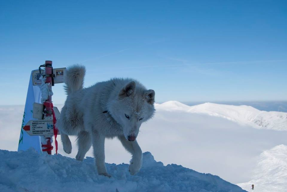 Неймовірна краса зимових Карпат: у мережі набирають популярності світлини із лижної мандрівки засніженими горами (фоторепортаж)