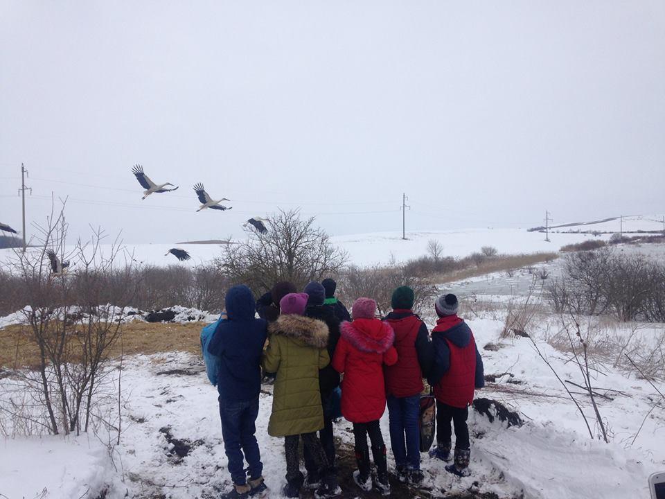 Як на Прикарпатті рятують лелек (фото)