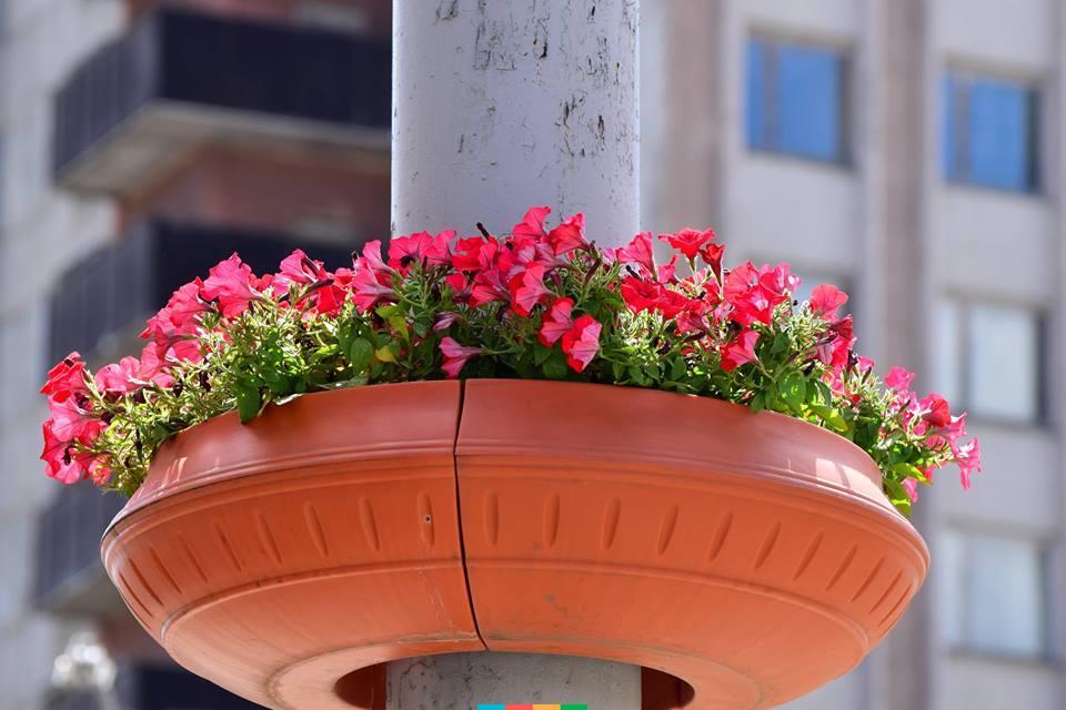 На опорах Івано-Франківська замінять старі вазони