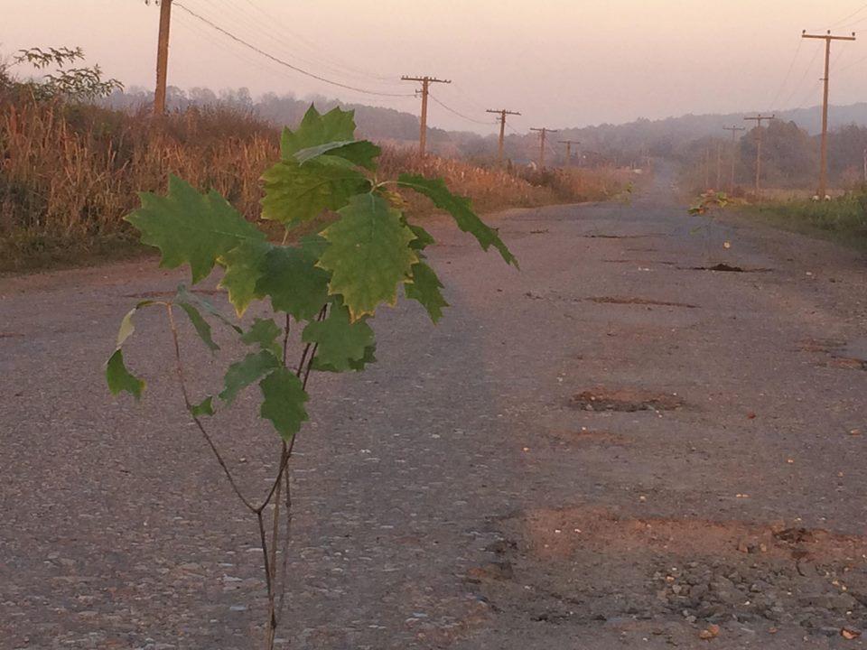 Земля не має пустувати, хай щось росте: на Рогатинщині в ямах на дорогах висадили дерева (фоторепортаж)