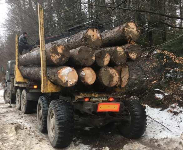 Прикарпатський активіст показав за якою схемою розкрадаються карпатські ліси (фото+відео)