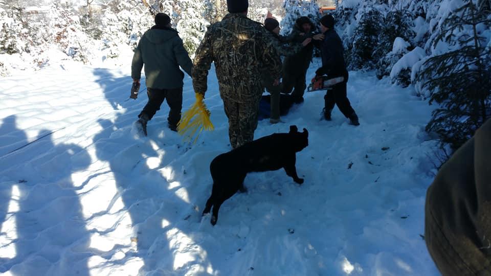 """На Косівщині працівники нацпарку """"Гуцульщина"""" затримали лісників, які пиляли ялинки у заповіднику (фоторепортаж)"""