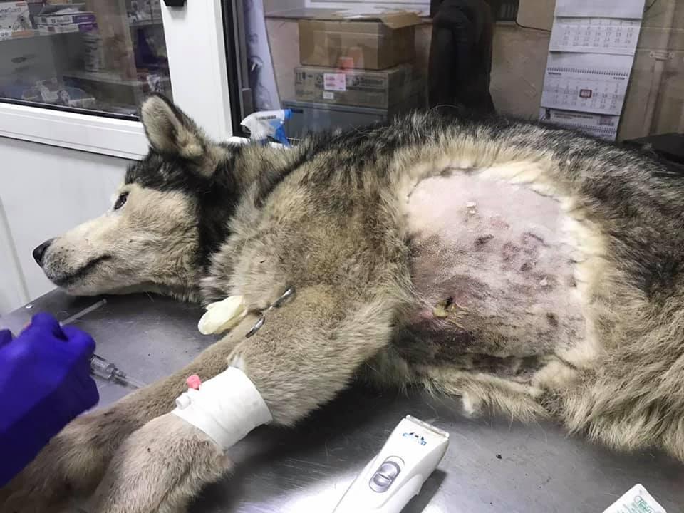 Хороші новини: у Франківську собака, якого жорстоко побив господар ...