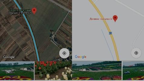 Тюльпанове поле під Франківськом